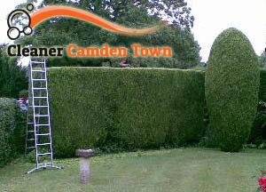 Hedge Maintenance Camden Town