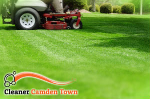 grass-cutting-camden-town